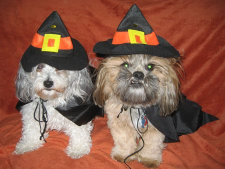 A Pair of Witches