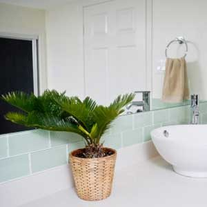 3. Plant in the Bathroom