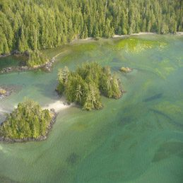 Nootka Island from Above
