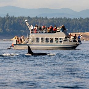 Whale Watching in North America