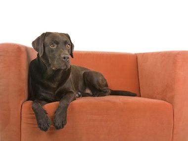 Pet care secrets #42: