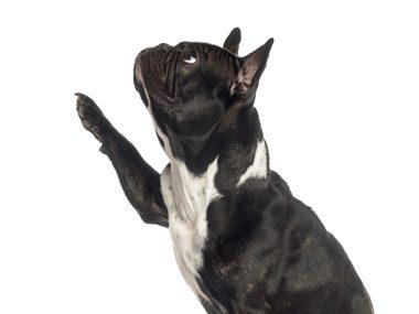Dog behaviour secrets #41: