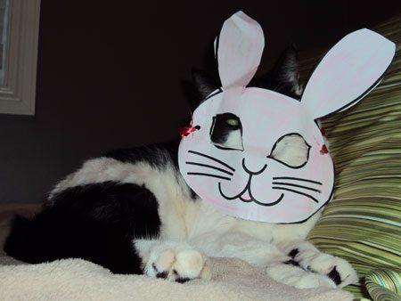 A Rabbit that Says