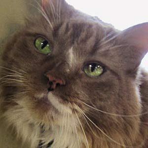 5. The Life Saving Kitty