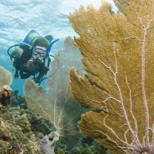 5. For an Old School Atlantic Adventure: The Florida Keys