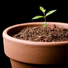 5. Repair a Bent Plant Stem