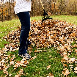 5. Collect Leaves