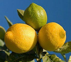 5. Chamomile Tea with Lemon Can Lighten Hair
