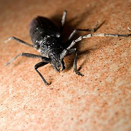 Keep Insects Out of the Kitchen