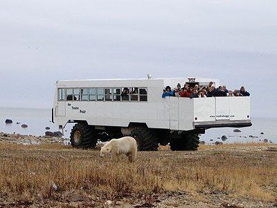 Last Stop in Churchill: Tour the Tundra