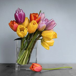 Extend the Life of Cut Flowers