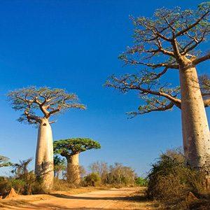 3. Madagascar