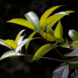 Try Tea-Tree Oil