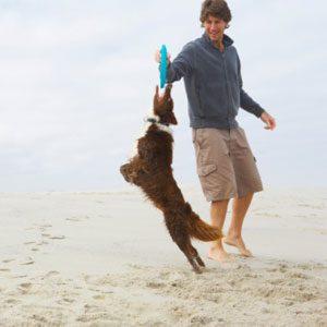1. Consider The Dog's Energy Level