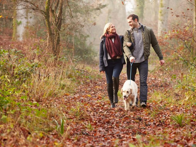Couple walking their dog in forest