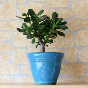 6. Keep Indoor Plants Dry