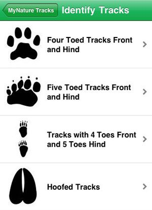 8. Fast Track