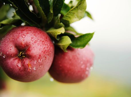Eat Two Apples Every Day