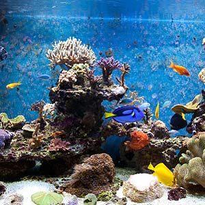 Tips for Both Freshwater and Saltwater Tanks