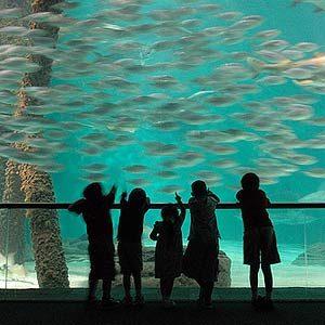 7. Aquarium of the Americas