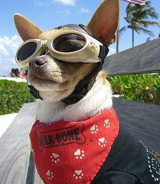 The Dog Aviator