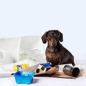 4. Confine Your New Pets