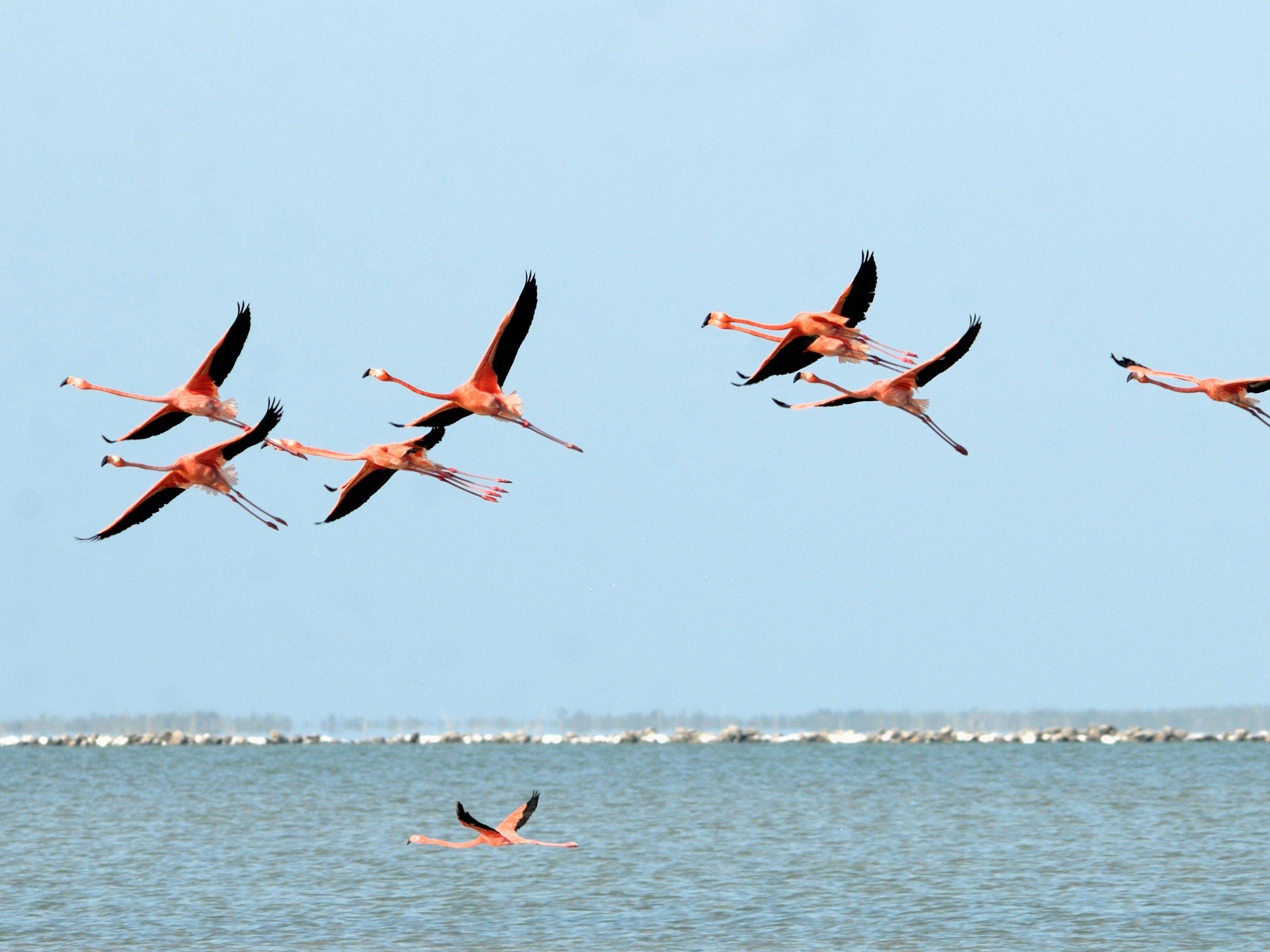 9. Inagua Islands, Bahamas