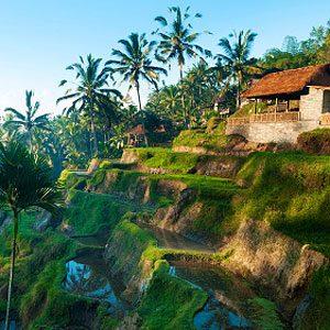 3. Ubud, Bali