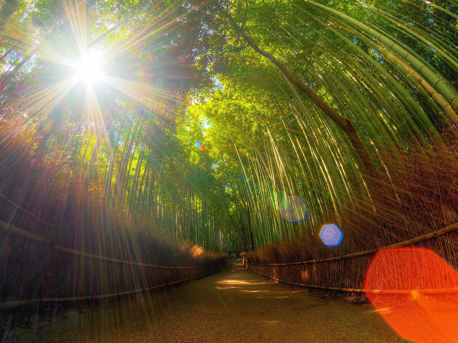 Natural Wonder: Bamboo Grove, Japan