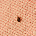 How to Prevent Bedbugs in Your Home