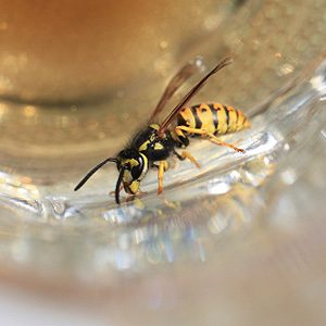 3. Keep Bees Away from Beverages