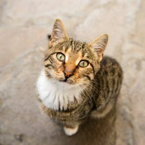 You Should Know This About Your Cat: They Can Learn A Few Tricks