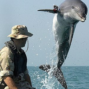 1. Military Dolphins