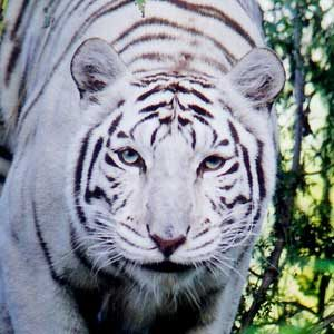 Ideas for Florida Vacations: Big Cat Rescue