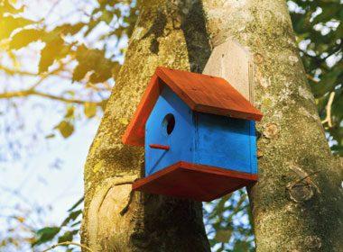 Put Up Birdhouses