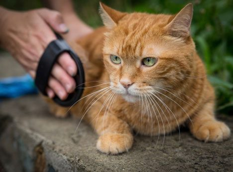 Keep Your Pet Well Groomed