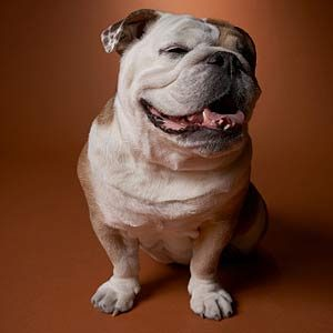 Weight Watchers: Canada's Pet Obesity Problem