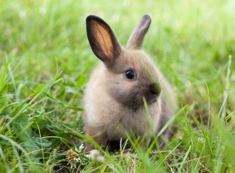 Let Bunnies Burrow