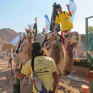 2. Save a Horse, Ride a Camel
