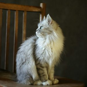 Things to Know About Cats: A Cat's Purr Isn't Always Good