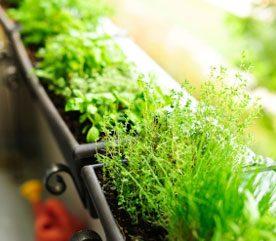 Companion Planting Strategies