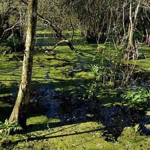Why Visit Florida? Corkscrew Swamp Sanctuary