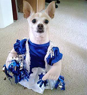 Dallas Doggie Cheerleader