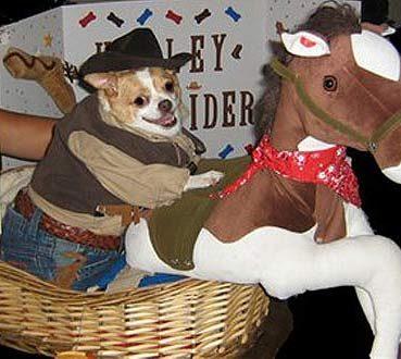 Giddyup Doggie