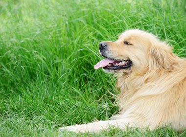 Things to Know About Dogs: Dog Bones