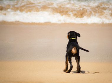 Things to Know About Dogs: In the Beginning