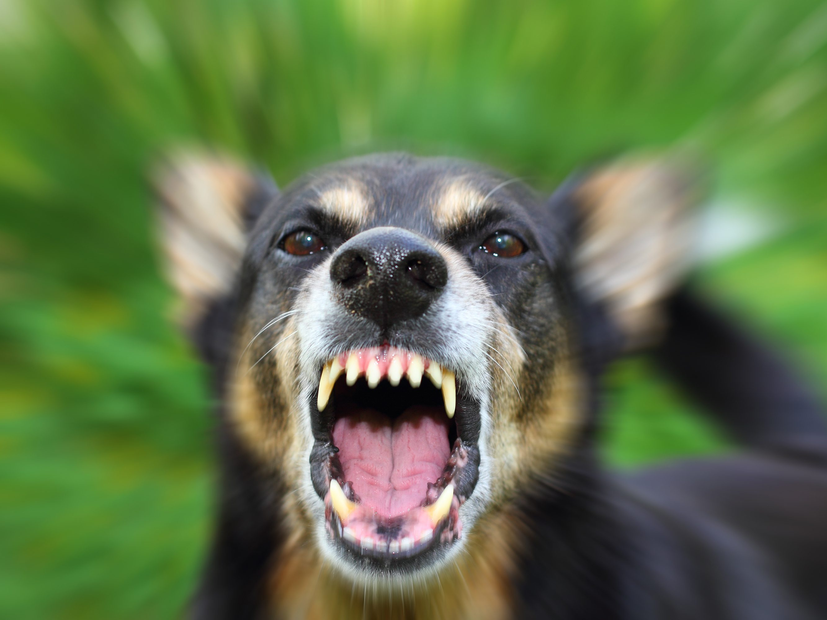 What to do When a Dog Bites