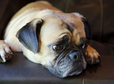 Things to Know About Dogs: Scaredy Cat