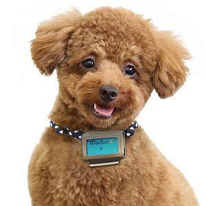 1. Dog Pedometer