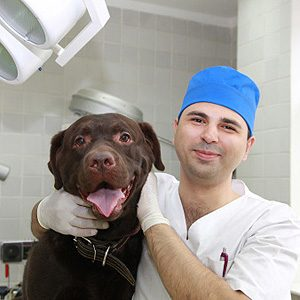 2. Cancer Sniffing Dogs